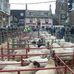 Uppingham Fatstock Market
